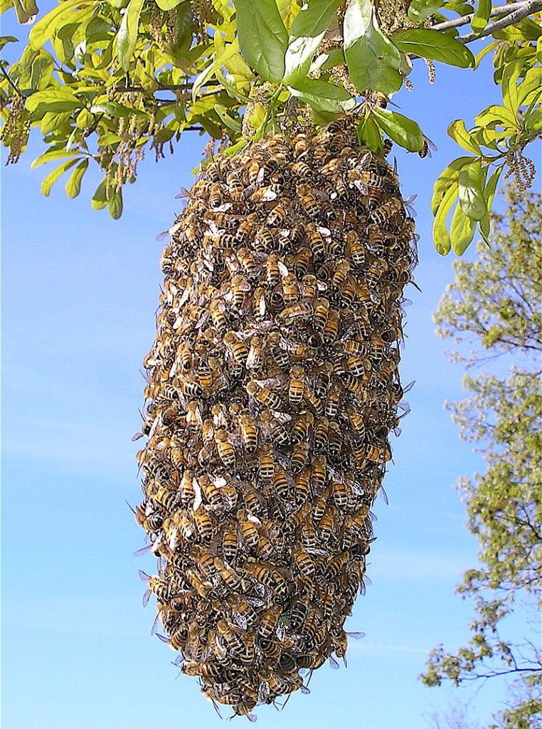 bee swarm 4