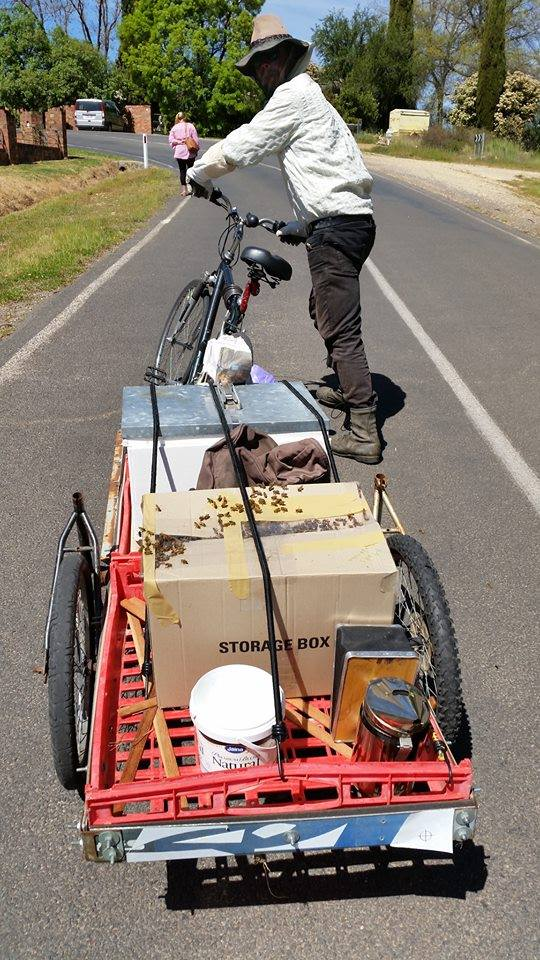 me with bike trailer